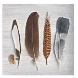 Servilleta 3 capas. Collection of feathers.
